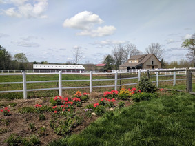 farmview1.jpg
