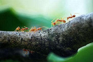 Ameisen.jpg