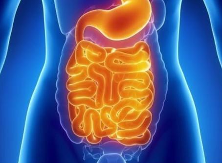 """Conférence : """"Comment nos Intestins sont-ils en lien avec notre santé ?"""""""