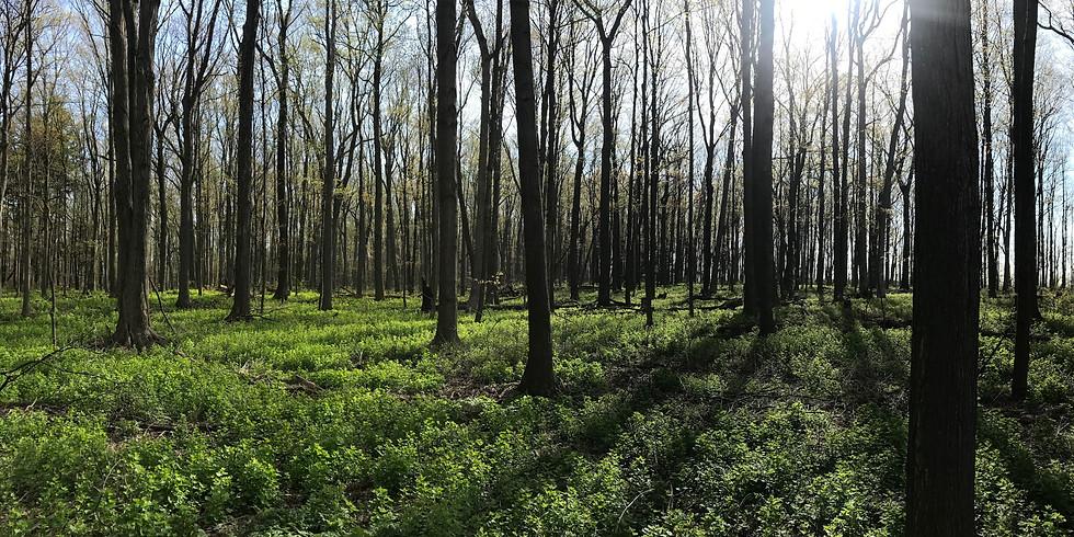 Black Woods Run