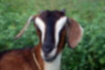 goat headshot-2008.jpg