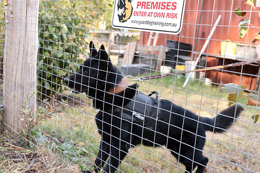 uzzi defence-dog-fence.jpg