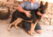 yultzen-adolpho-shepherd.jpg