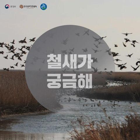 [카드뉴스] 철새가 궁금해!