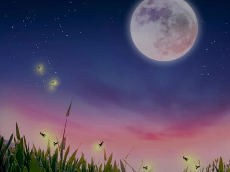 [카드뉴스] 반딧불이가 빛나는 감성충만 아름다운 생태관광지역
