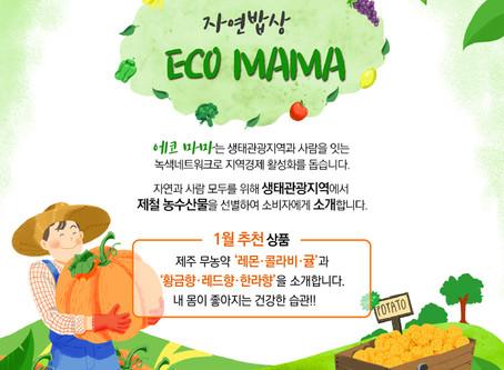 [에코마마] 청정제주에서 자란 농산물을 소개합니다.