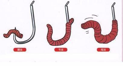 溪釣攻略》大自然的萬能餌「蚯蚓」,你知道它的正確用法嗎?