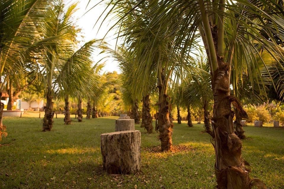 Coqueiros gramado central