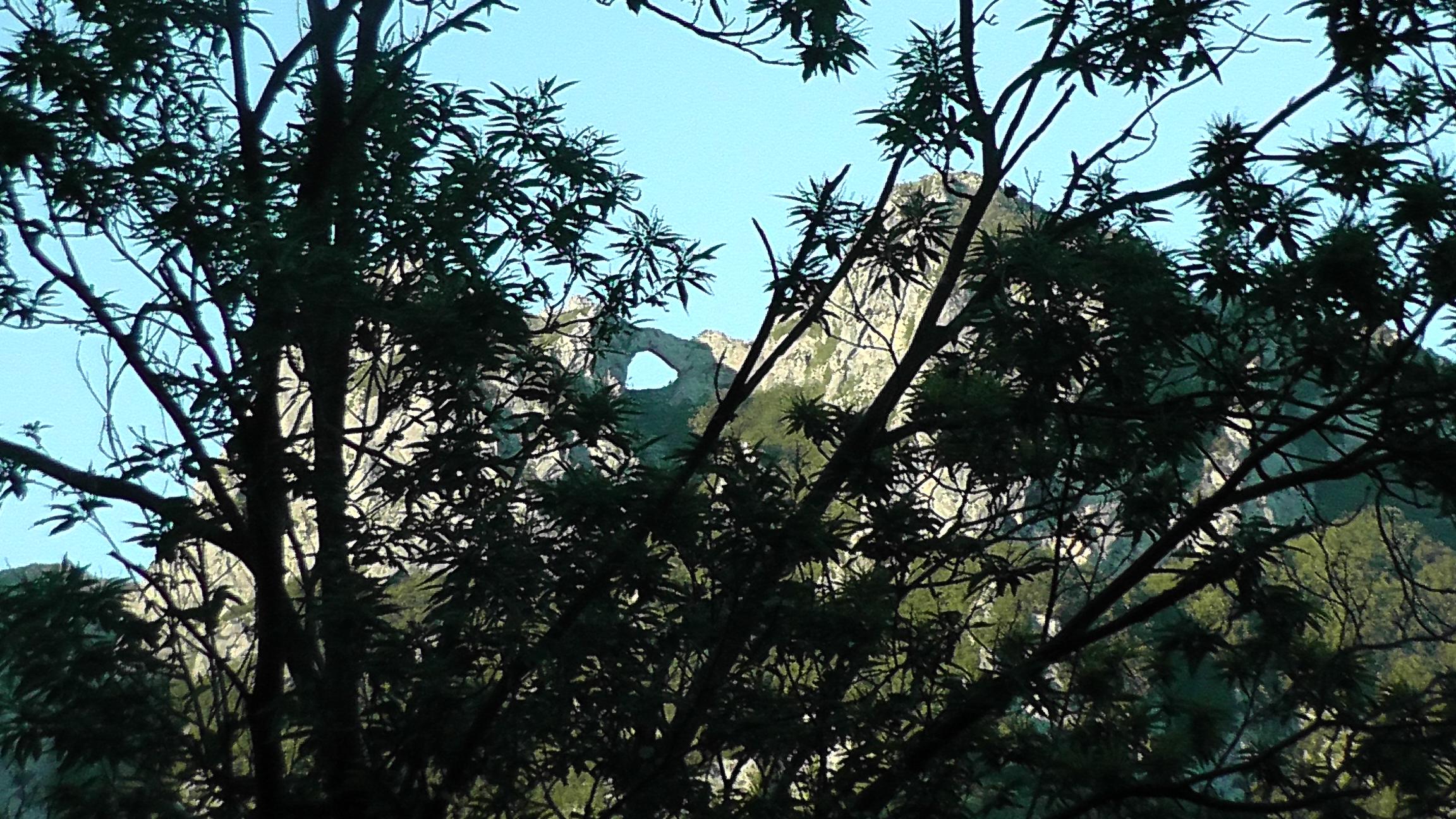 Veduta del Monte Forato dal bosco