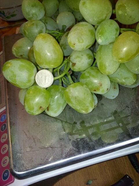виноград сорт монарх.jpg