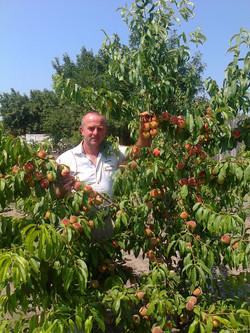 персиковый сад - Ейск