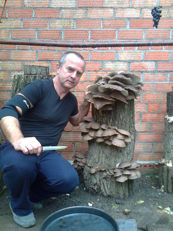 декоративные пни с грибами