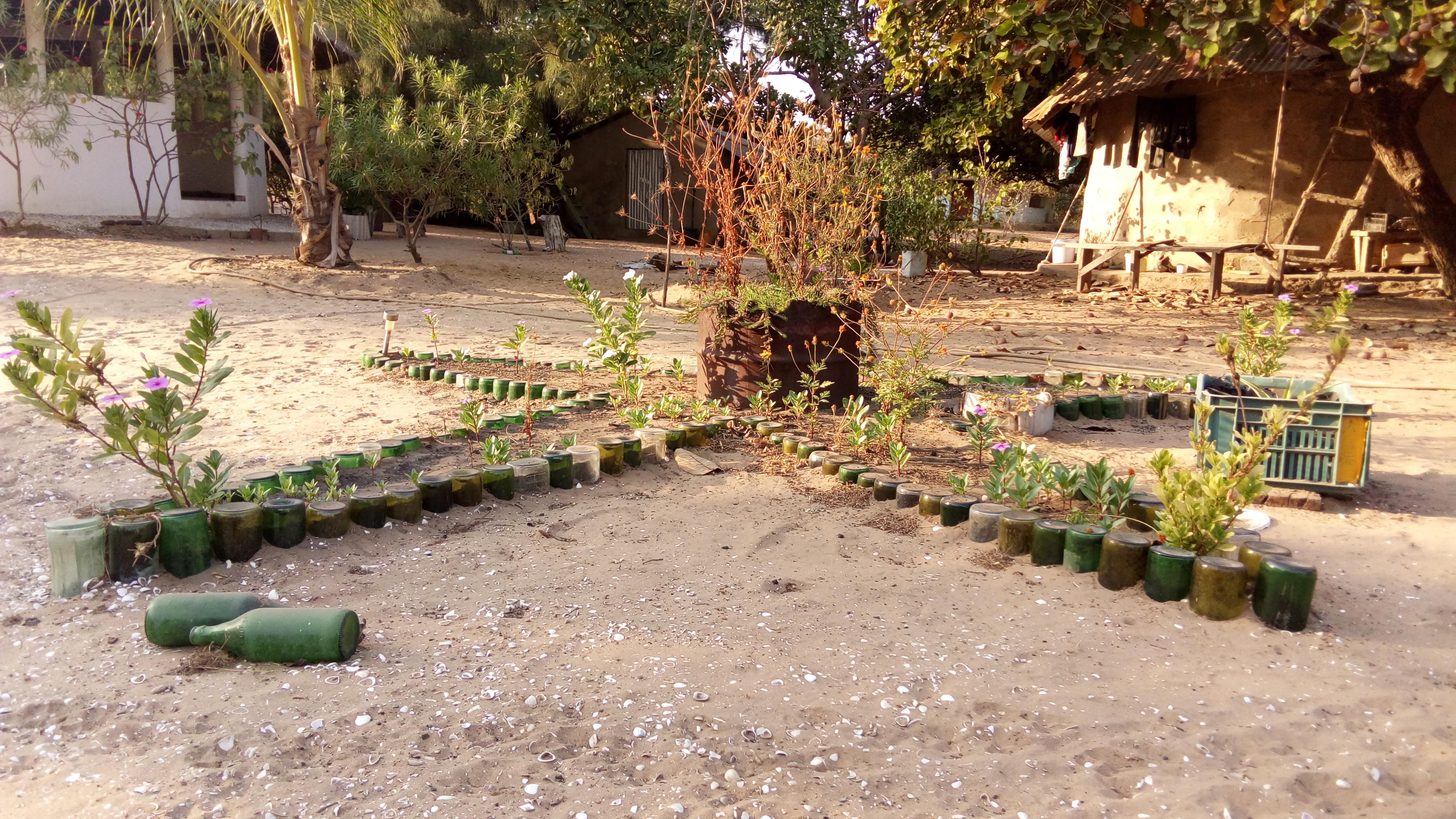 Plantes aromatiques et botaniques