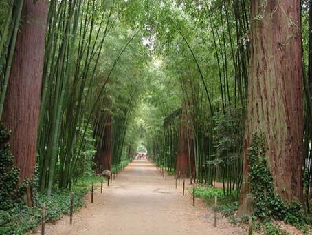 Bambouseraie Anduze