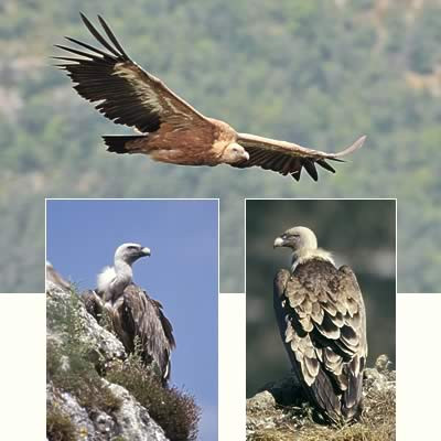 Maison des vautours