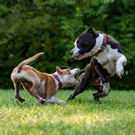 Dog Attacks – who's to blame?