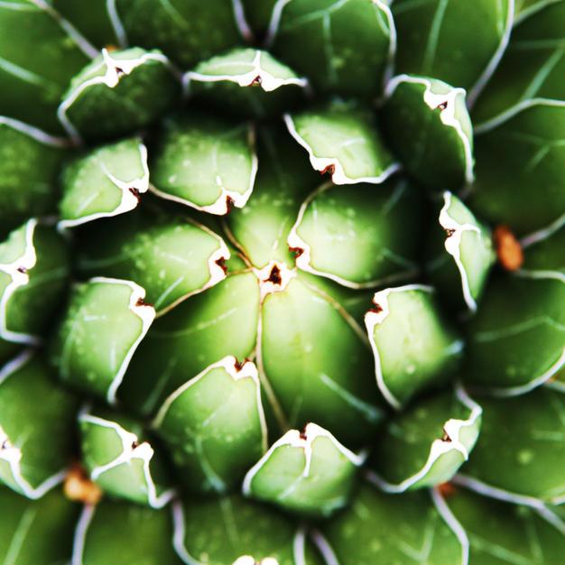 cactus (3).jpg
