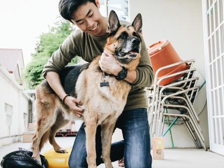 What is Animal Rehabilitation?