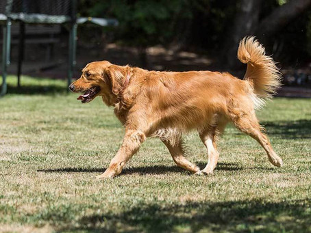 Does my dog need physiotherapy/rehabilitation?