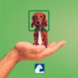 Pai_é_quem_Cria_-_Nucleon_Adote_Cachorro