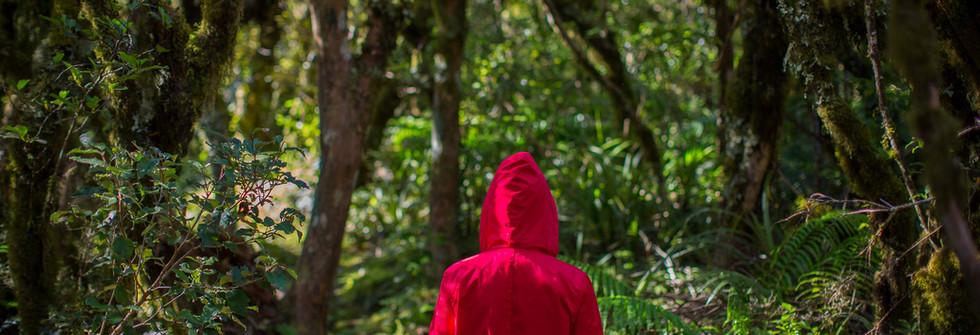 Bush walks at Hilltop Villas