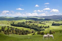 Country Views Waikato Hilltop Views