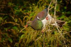Birds Hilltop Views Villas