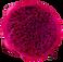 Red dragonfruit 2.png