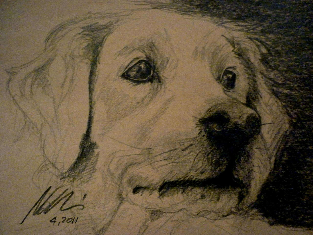 Dog ©Nadia Besomi