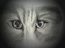 Eyes ©Nadia Besomi