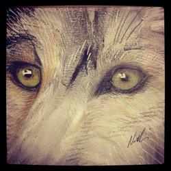 Wolf's eyes ©Nadia Besomi