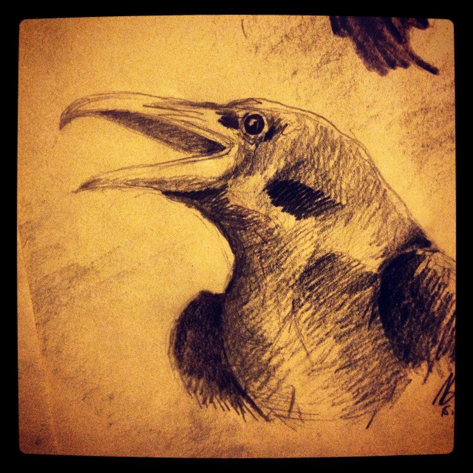 Raven ©Nadia Besomi
