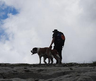 Elevage de st-bernard suisse - randonnées