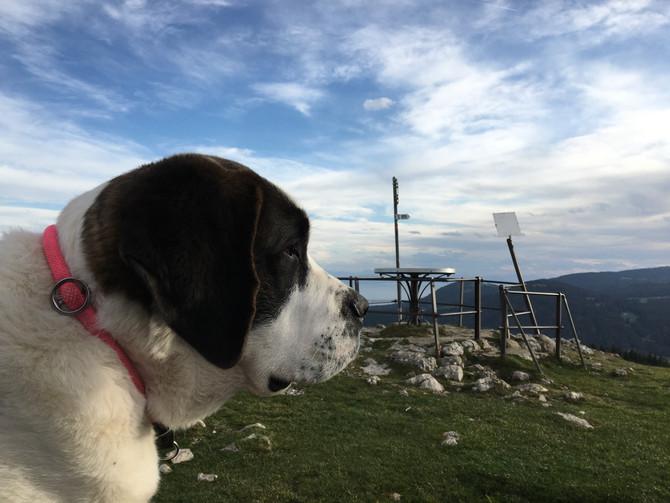 Fantabulous Angela de l'Orée des Montagnes (12.05.2019)