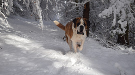 Premières neiges...