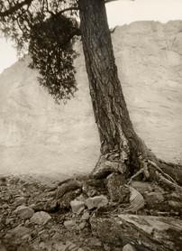 Mark James, Red Rock Canyon Tree, 2018