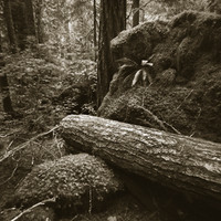Mark James, Olympic Forest, 2014