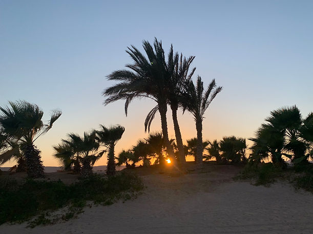 Sunset behind palm trees in the Egyptian desert in El Gouna