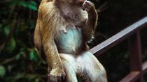 #Monkey 🙈🙉🙊