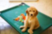 puppy hammock sm.jpg