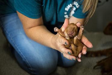 becky poppy puppy 3 sm.jpg