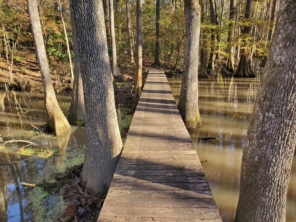 Bridge over swamp