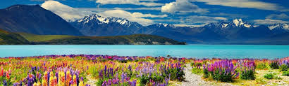 Reasons to Migrate to New Zealand