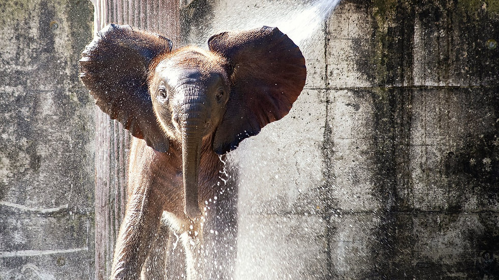 Animal Conservation | Save The Elephant Project