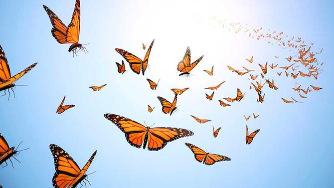 First Class Butterflies