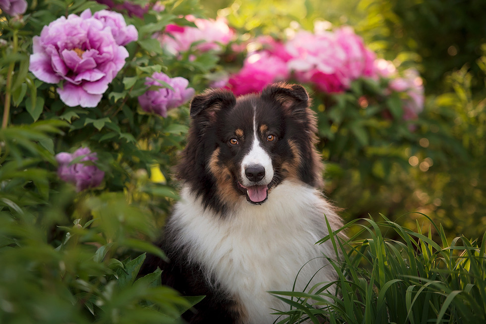 Ottawa Pet Photography