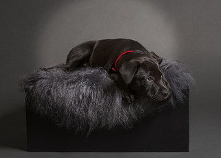 Studio Pet photography