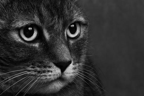 Studio pet photography