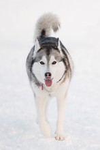 Ottawa Pet Photographer