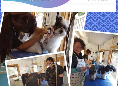 Train as a Qualified Dog Groomer in 2019  One to One Guided Tuition.